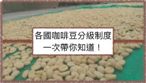 咖啡豆分級